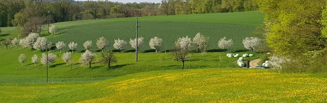 Obstbäume am Bözberg