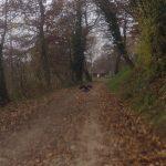 Im Aaretal hinauf - auf altem Bernerweg zurück