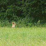 Beim Fuchs vorbei geschaut