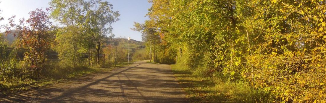Herbstlicher Radweg auf dem Damm der Aare bei Schinznach-Bad