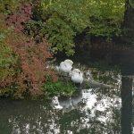 Aaremündung - Wasserschloss