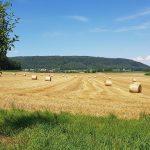 Geerntetes Getreidefeld bei Riniken