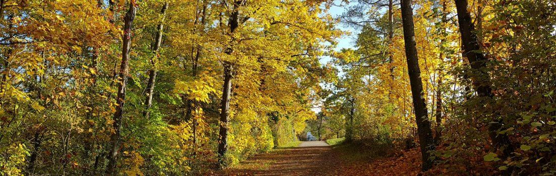 Herbstwald / Auenwald