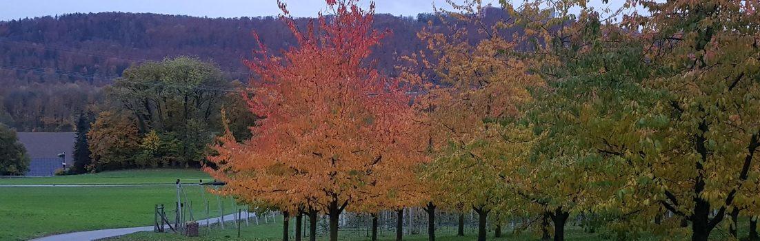 farbiger Obstbaum