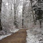 Schnitzeljagd im Schneeregen