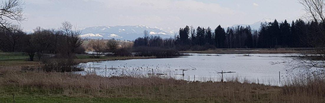 Am Flachsee bei Bremgarten